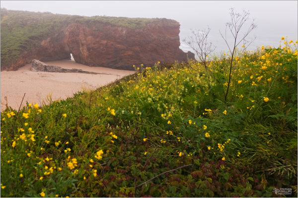fog and wildflowers at the beach