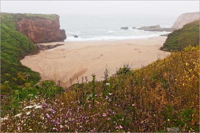fog and flowers along a California beach