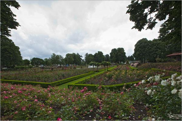 North Portland Peninsula Rose Garden corner view
