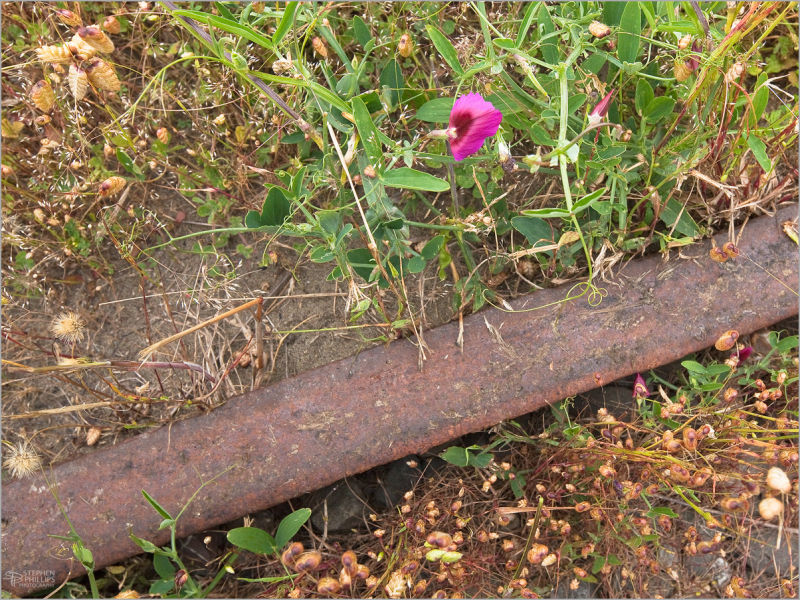 an old railroad bed gives way to nature