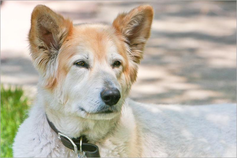 Izzy the dog