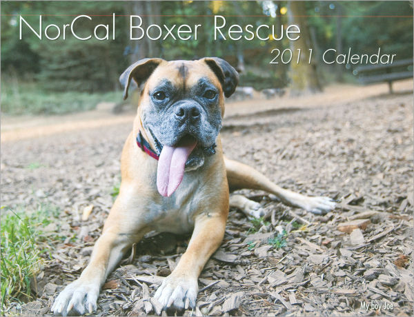 Joe Boxer Rescue calendar cover 2011