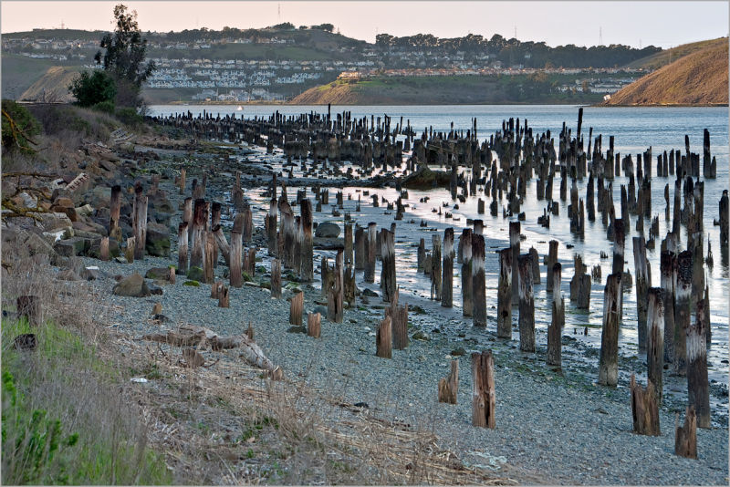 Pilings in the Carquinez Strait