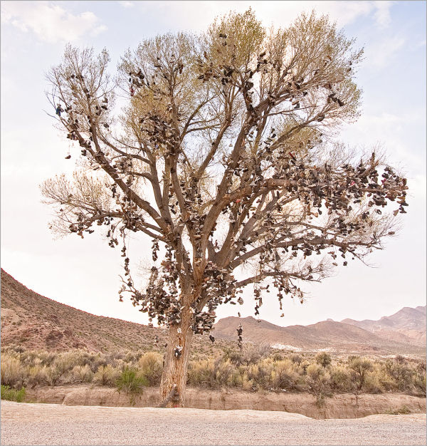 The Shoe Tree in Nevada