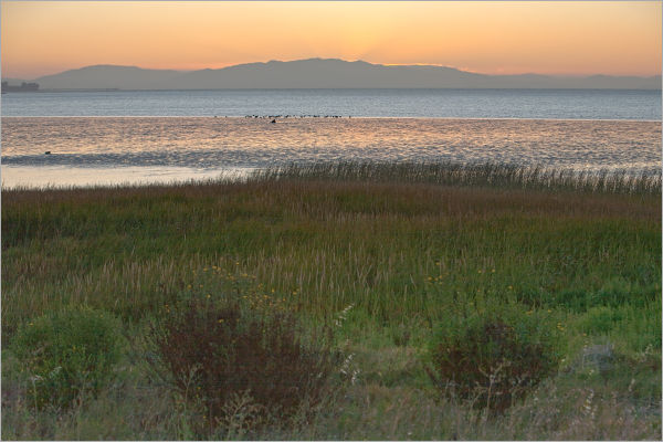 Pinole Marsh, California