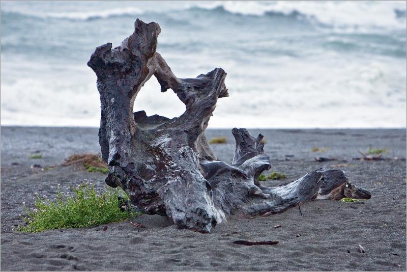 driftwood at Stone Lagoon - Humboldt County - Ca