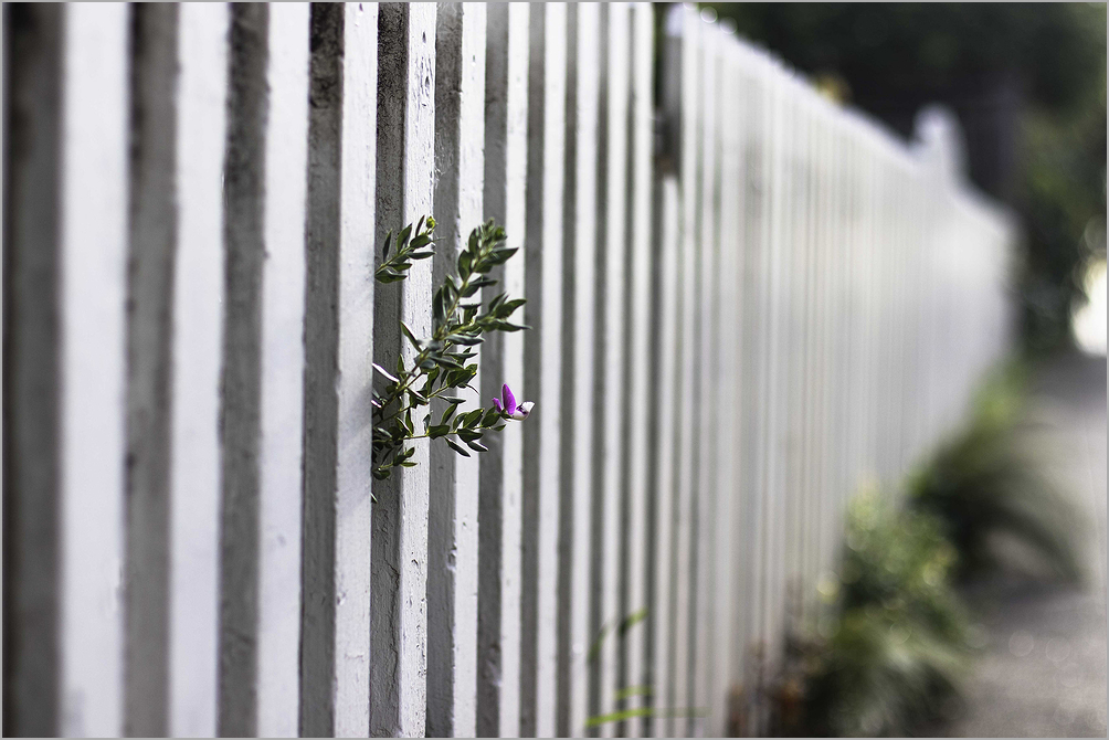 fence in springtime