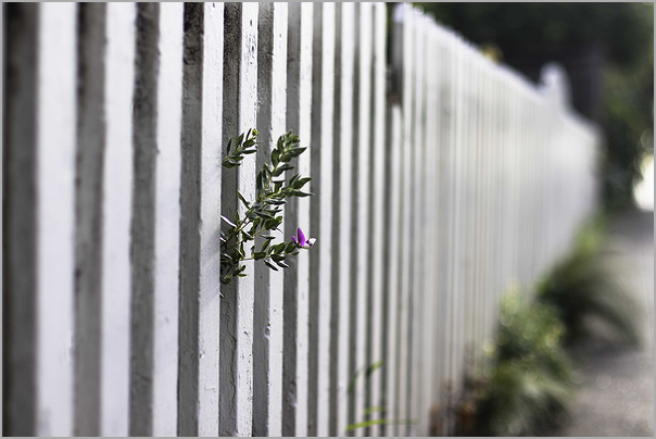 fence in springtime