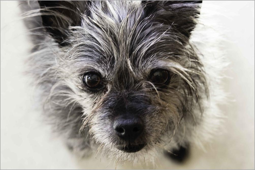 An adorable dog named Roxie