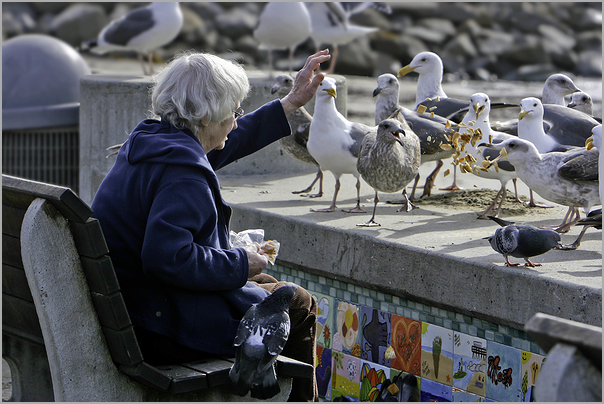 Woman at the beach feeding the birds