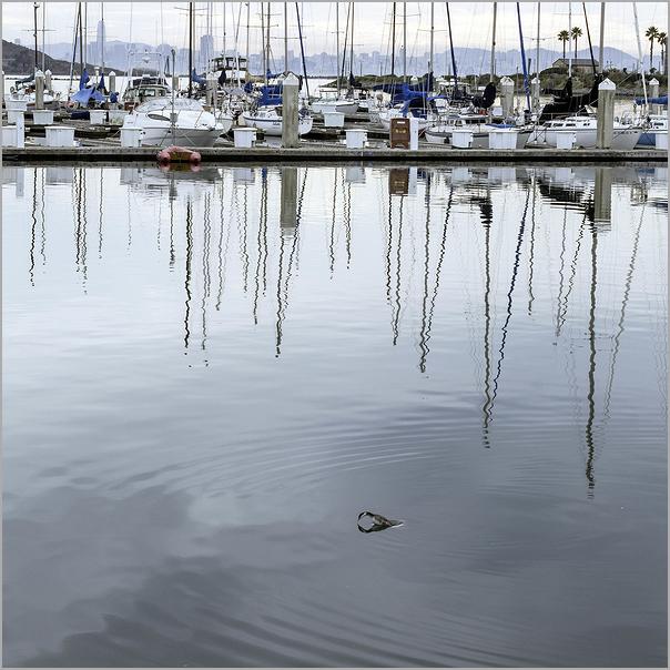 Loon Resurfacing in Richmond california