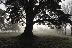 Trees in Misty Light