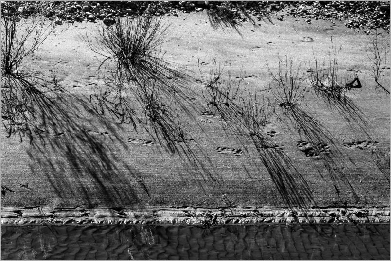 Shadows on The Riverbank