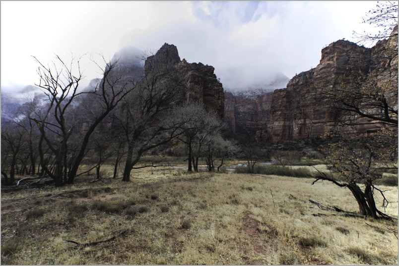 Zion National Park - Meadow in Winter