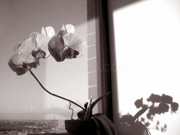 City View with Orchids in Monochrome