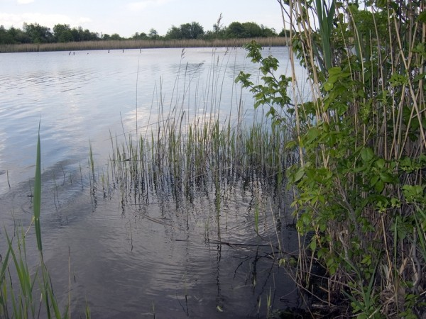 East Pond View 3