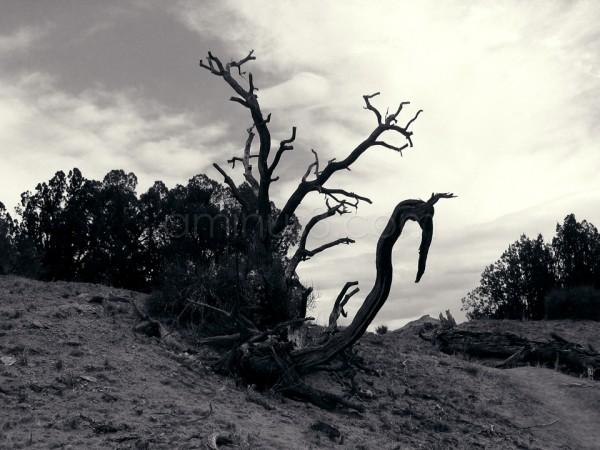 Utah Landscape (monochrome)