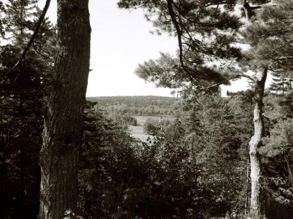Acadia National Park in monochrome