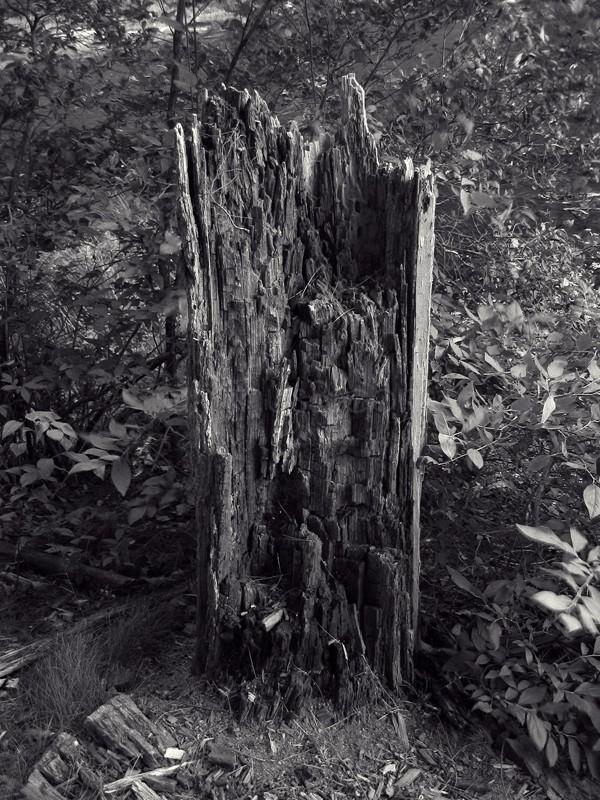 Forest Food (Tree Stump)