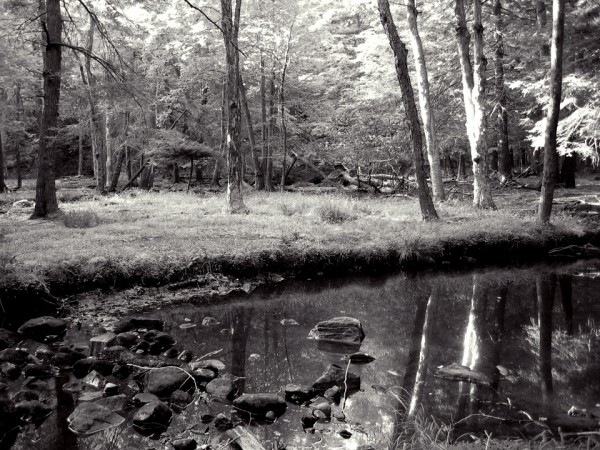 Summer's Eve on the Stony Brook Trail, No. 2