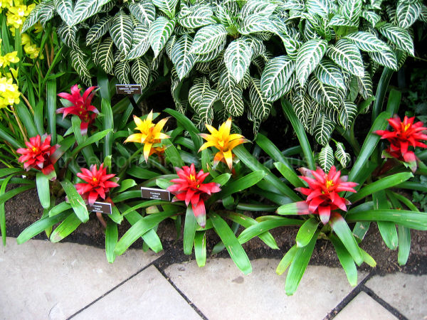 Bromeliads and Tile