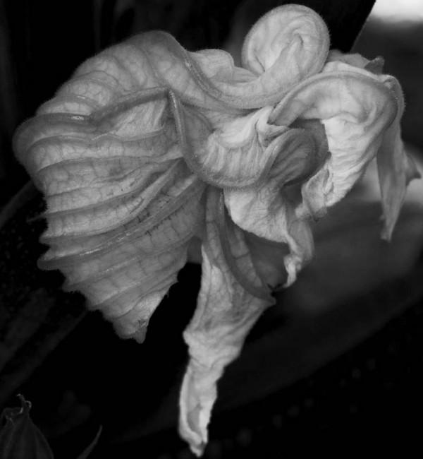 Flower blossom looks like an angel