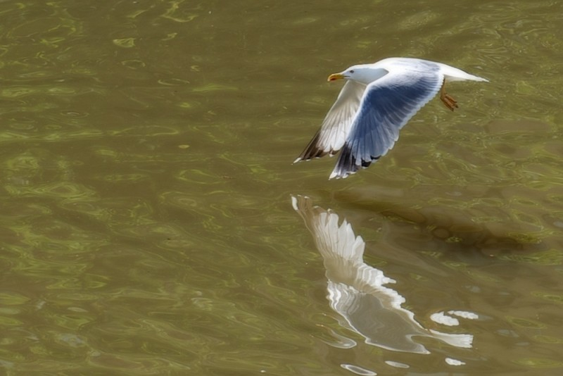 In the Urumea river