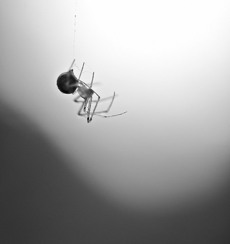The little spider