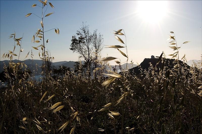 in a field, view to prodromos church, milos island