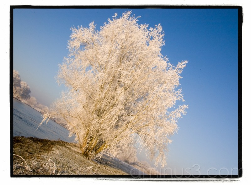 frozen tree in winter landscape