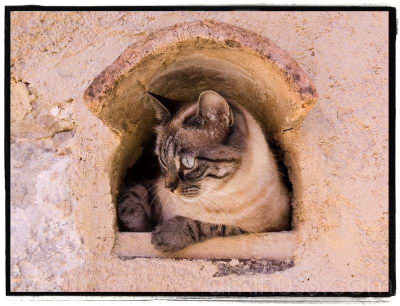 Cats of the Provence