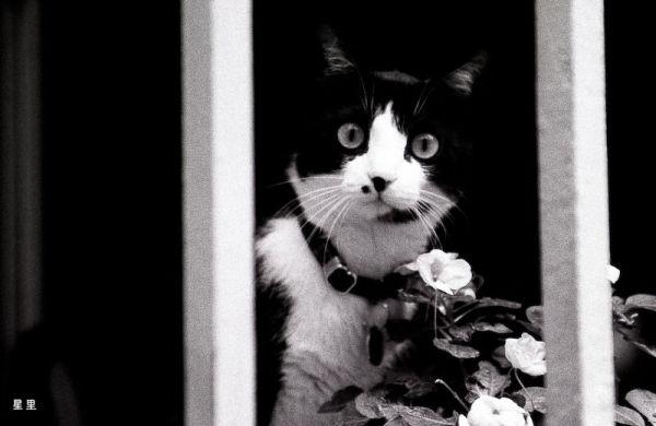 Curious cat in Grasse, France