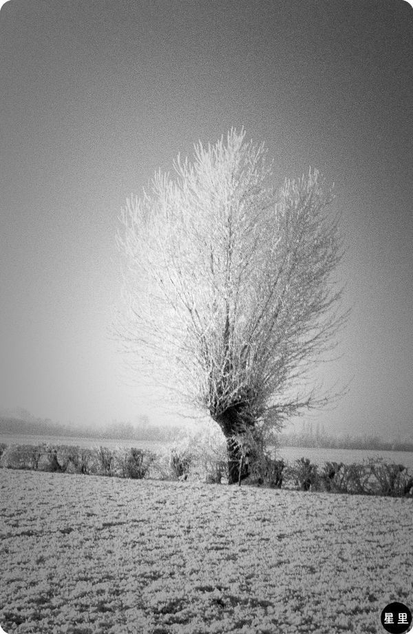 Winter landscape with tree