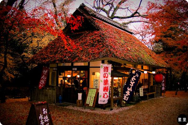 autumn colours japan