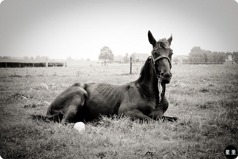 Horse relaxing in field