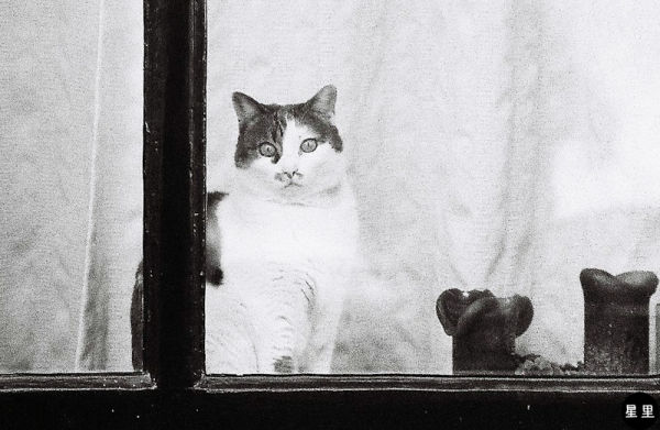 Observing cat