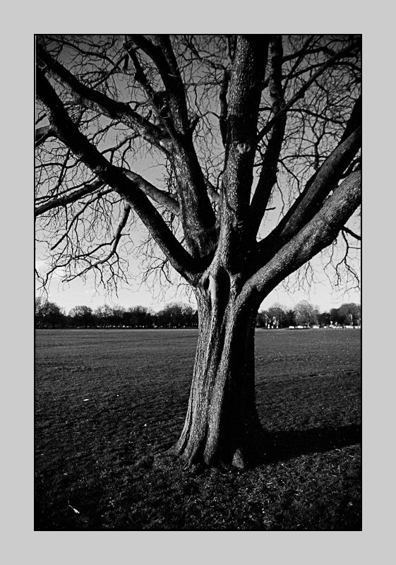Ealing Common