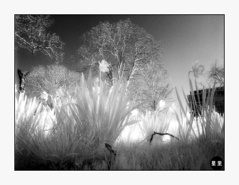 Infrared: Spring Flowers