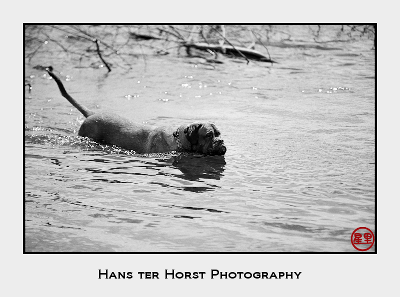 Bathing dog