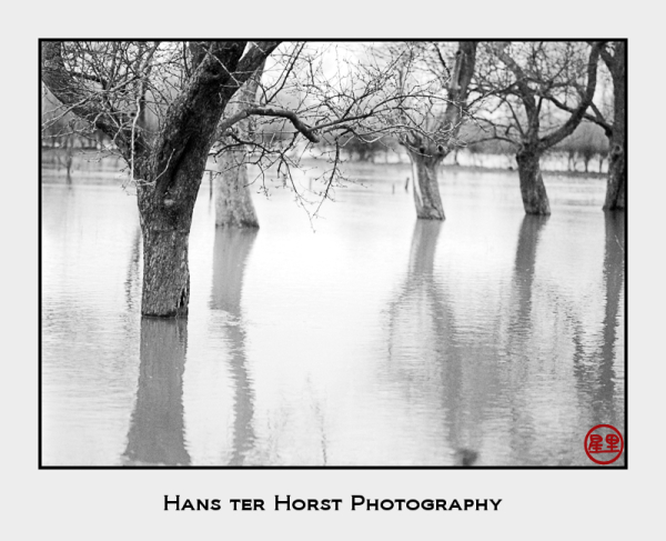 The flooded orchard