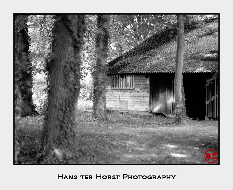 The shed in the woods