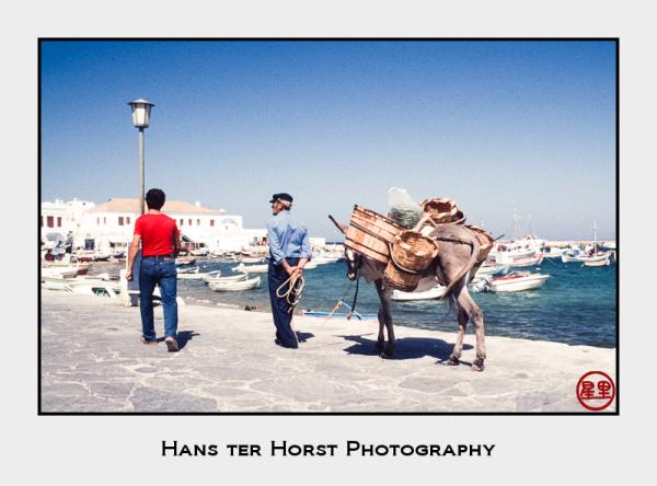 Donkey on the pier