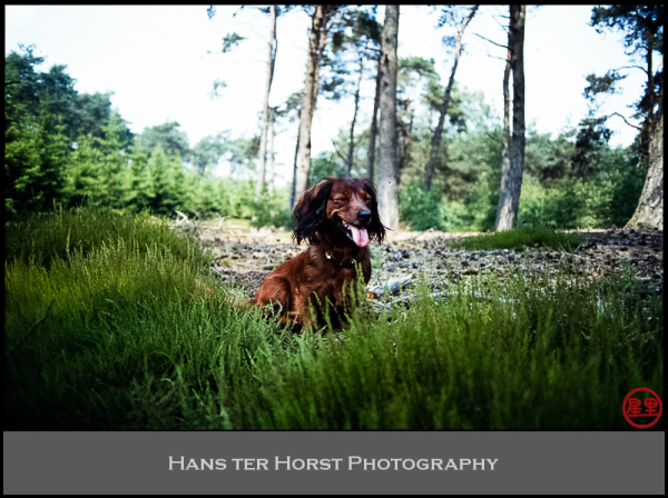 More of Tanja, our dog