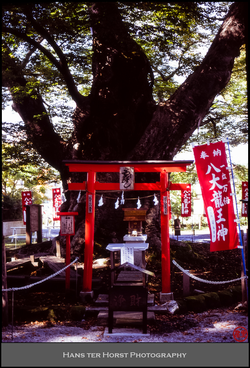 The kami in the tree