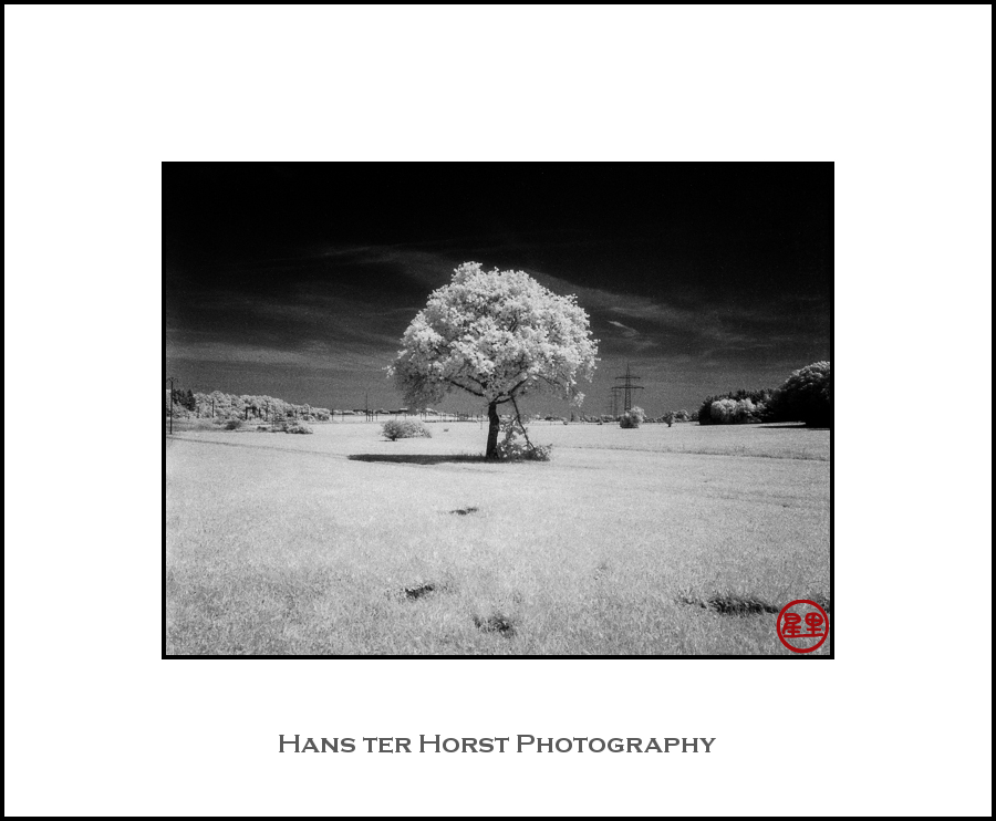 Infrared landscape with tree