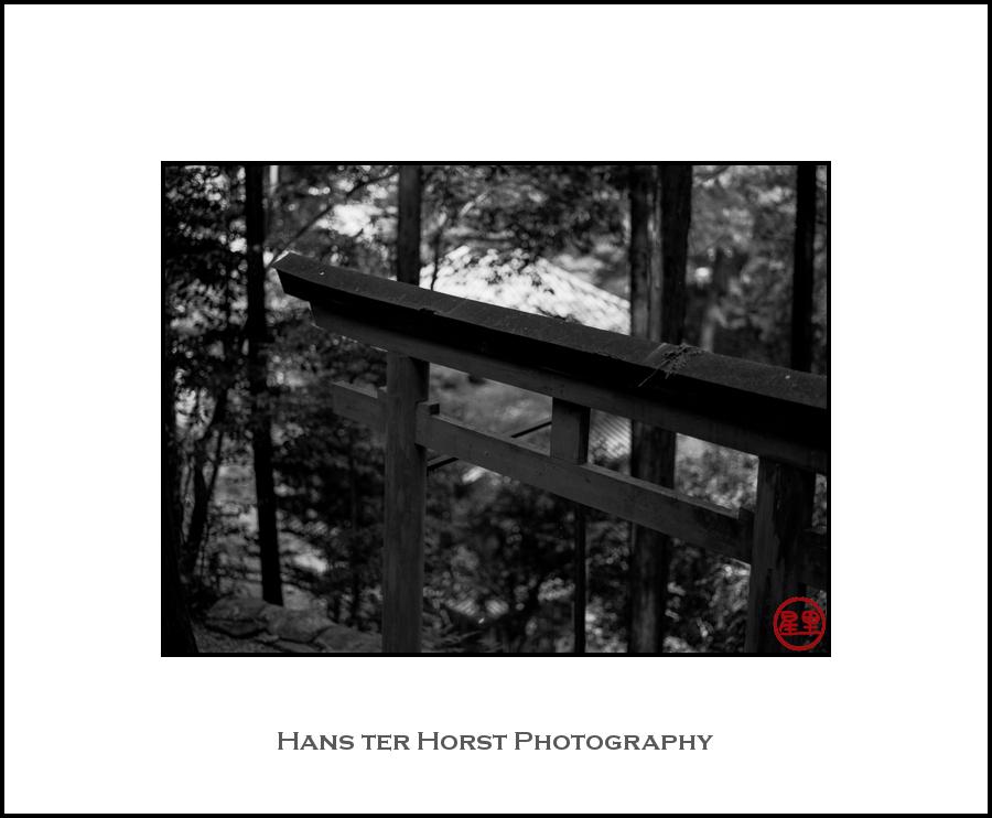 Torii of shrine hiding in woods