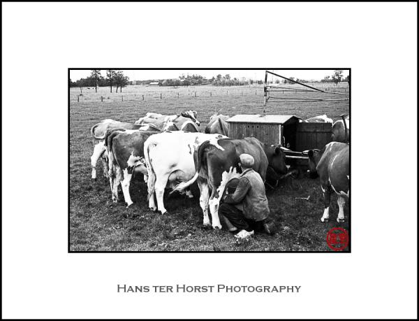 Vintage: Milking time