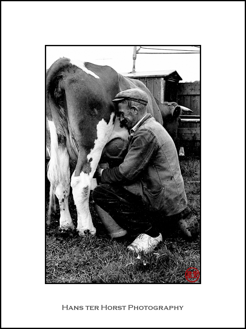 Vintage: Milking time