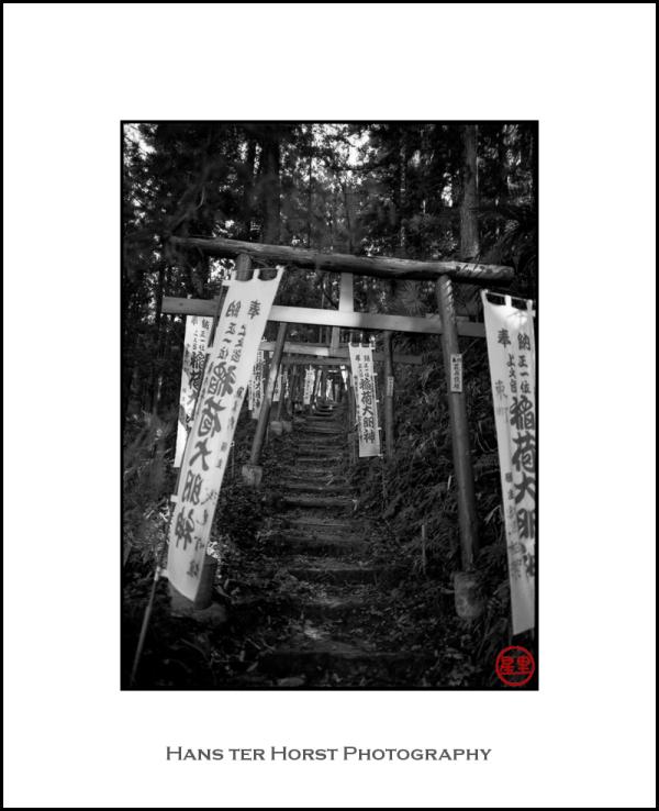 Series of toriis