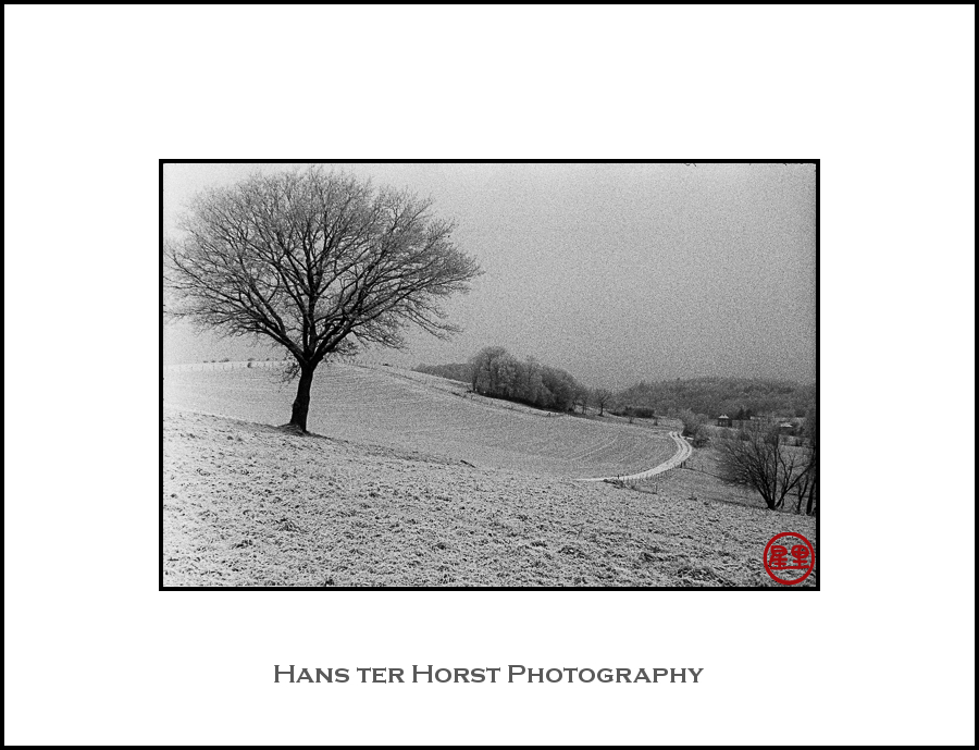 Zorki-S: Landscape with tree
